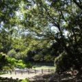 ひょうたん池公園 自然散策広場