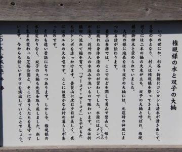火張山花公園 権現様の水と双子の大楠