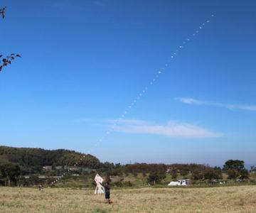 しまばら火張山花公園 コスモス畑 連凧
