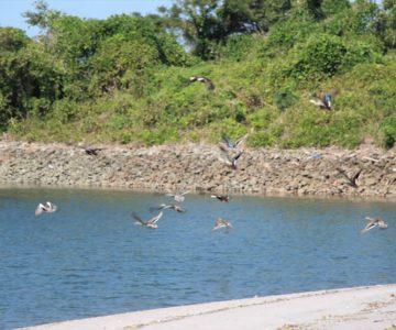 長浜海岸 鴨の群れ