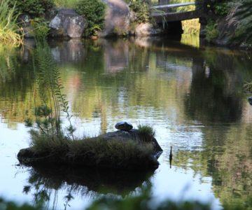 霊丘公園 池