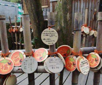 温泉神社 夫婦柿