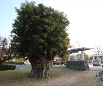 島原外港緑地公園 あこう