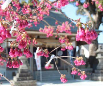 温泉神社 拝殿