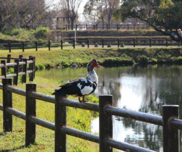 ひょうたん池公園 バリケン