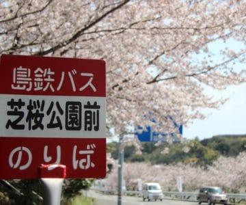 島鉄 芝桜公園前のりば