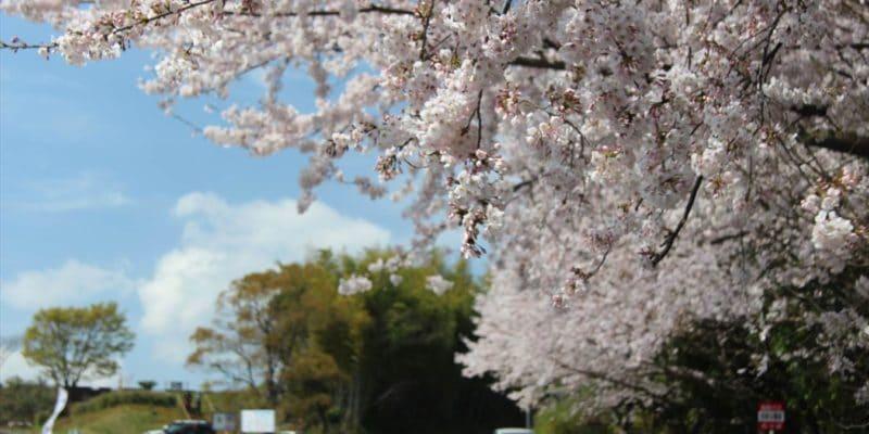 島鉄バス芝桜公園前のりば