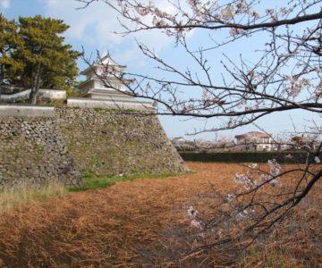 島原城 桜 巽櫓(西望記念館)