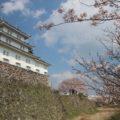 島原城 桜 丑寅櫓(民具資料館)