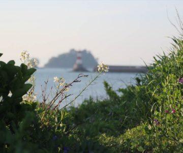長浜海岸 野花