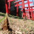丸尾稲荷神社 鳥居
