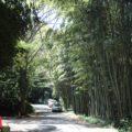 岩戸観光ガーデン