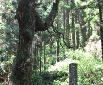 皇太子殿下御成婚記念植樹の碑