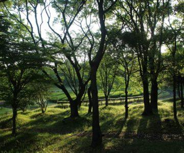 百花台公園 森林公園