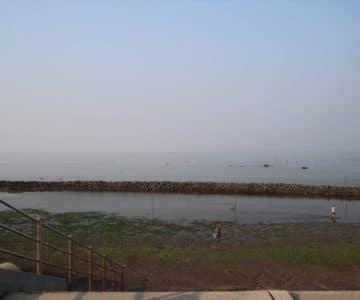 長浜海岸 スクイ漁