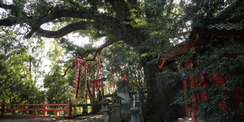 瓢箪畑稲荷神社 大楠