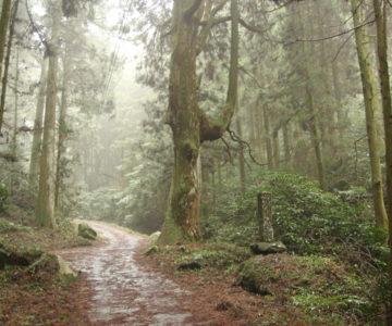 岩戸神社 皇太子殿下御成婚記念植樹の碑