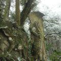 鳥兎神社 神武天皇と不動明王