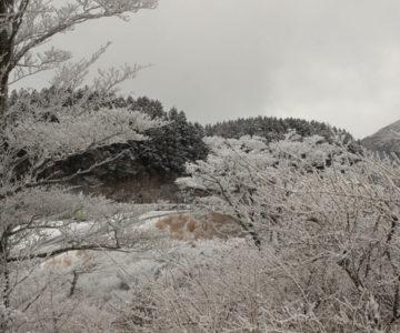 雲仙 霧氷