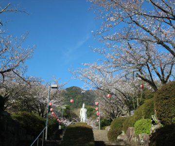 眉山治山祈念公苑 桜