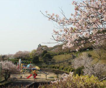 島原陸上競技場 ロケット公園 桜