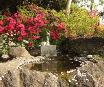 折橋神社 手水の龍