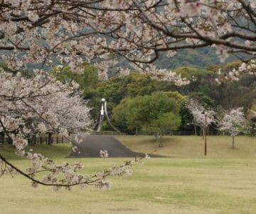 ひょうたん池公園 桜