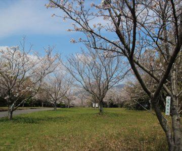 ふかえ桜パーク