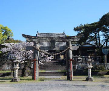 霊丘神社 桜