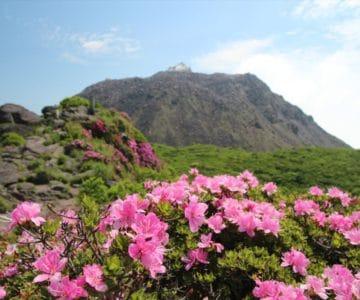 普賢岳山頂 ミヤマキリシマ