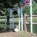 ひょうたん池公園 野バリケン