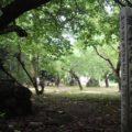 神代神社 還暦記念樹の碑