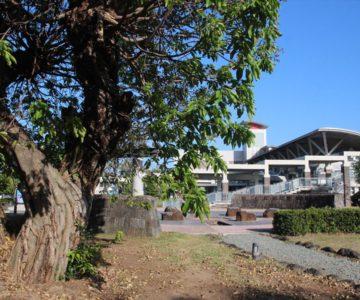 島原外港緑地公園 あこうの木