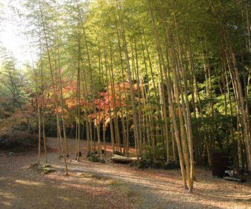 三十路苑 竹林