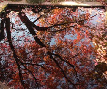 三十路苑 紅葉