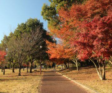 ひょうたん池公園 紅葉