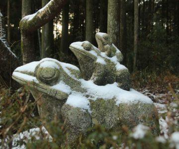舞岳涌水 カエル