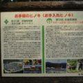 百花台公園 森林公園 お手植えのヒノキ(お手入れのヒノキ)