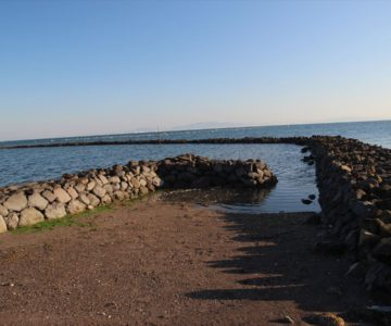 長浜海岸 スクイ