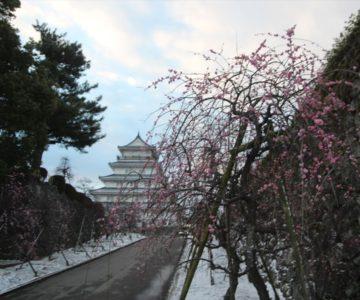 雪と梅と島原城