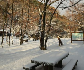 焼山園地 溶岩観察広場 雪化粧
