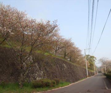 島原総合運動公園 桜 3/29