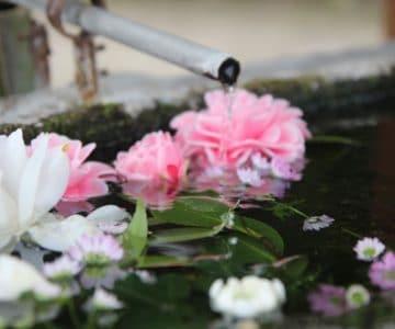 温泉熊野神社 手水鉢
