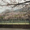 島原総合運動公園 桜 3/20