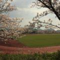 島原総合運動公園 桜 3/22