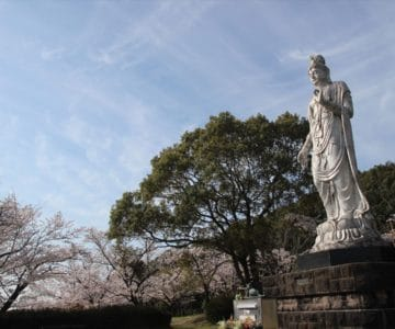 眉山治山祈念公苑 桜 3/24