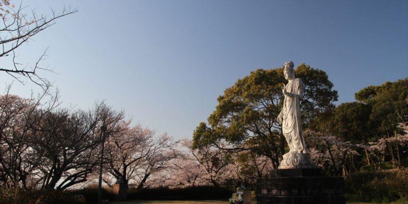 眉山治山祈念公苑 桜 3/26