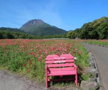 しまばら火張山花公園 ポピー