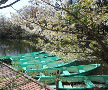 白雲の池 貸しボート