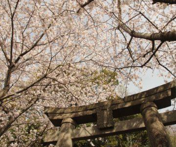 折橋神社 鳥居